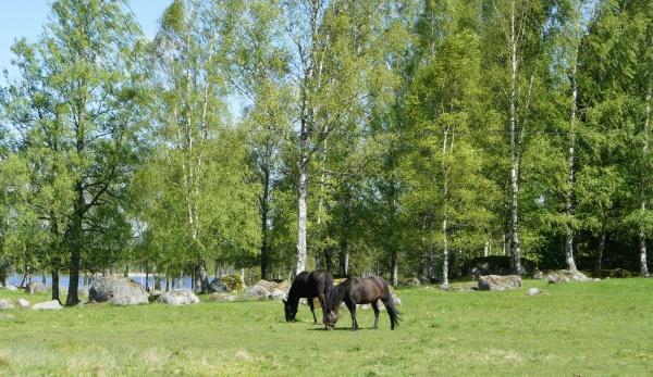 Hästudden