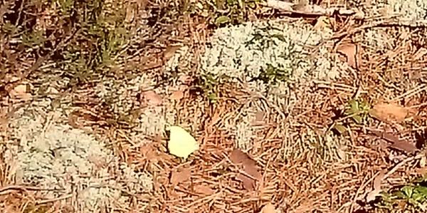 Till och med en citronfjäril var ute och flög!