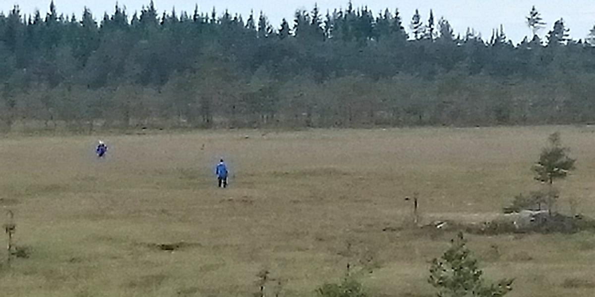 På jakt efter myrlilja. Foto: Christer Persson.