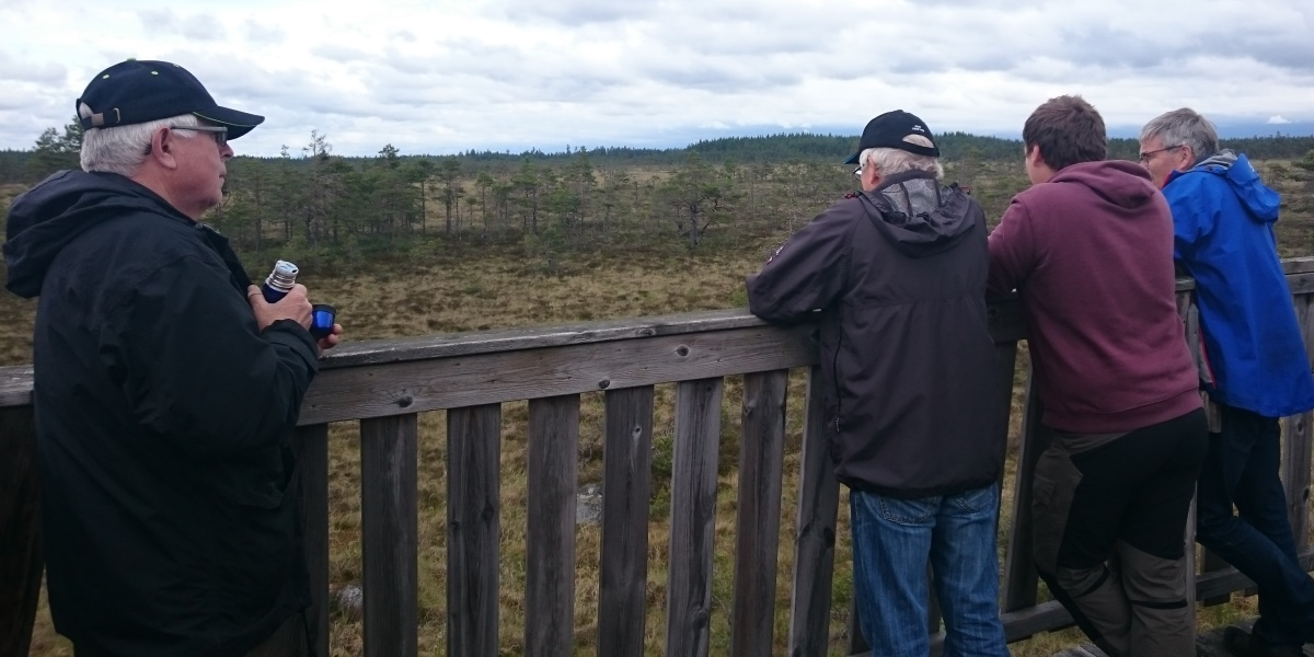 I utsiktstornet vid Södra Åsmossen. Foto: Christer Persson.